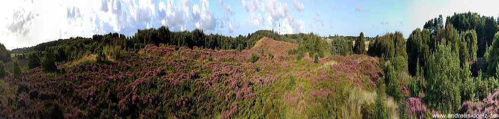 Panorama Heide-Blüte Leuchtturm Amrum